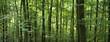 dichter Wald im Sommer