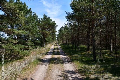 In de dag Weg in bos Summer impressions from Bialogora