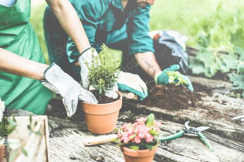 Canvastavla Gardeners hands putting plants inside pots