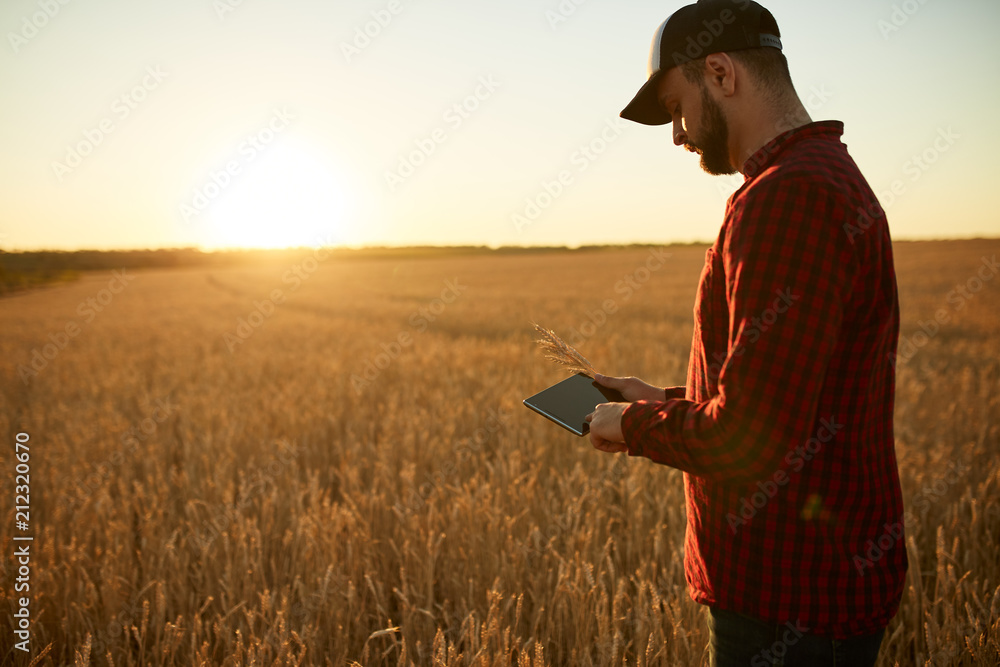 Fototapety, obrazy: Smart farming using modern technologies in agriculture. Man agronomist farmer with digital tablet computer in wheat field using apps and internet, selective focus. Male holds ears of wheat in hand.