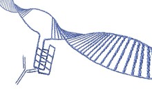 I-motif DNA Structure, Illustration