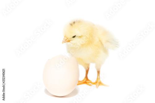 Keuken foto achterwand Kip Chicken hatched from the shell