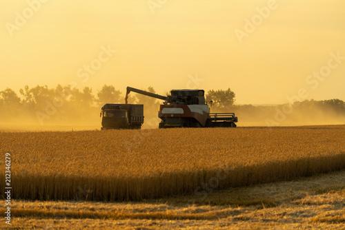 Staande foto Meloen Harvesting of wheat. Combine harvesters at work