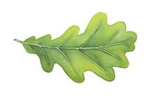 Green Decorative Oak Leaf Wate...