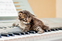 A Small Striped Kitten On The ...