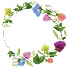 Oval Frame Ornament Flowers Pea