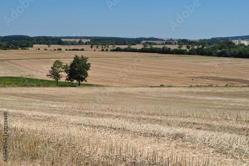 Fototapeta Lato w wiejskim krajobrazie obraz