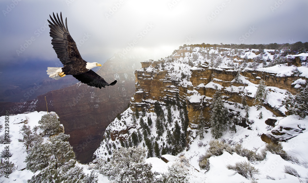 Bald eagle flying above grand canyon