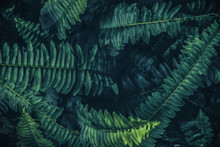 Tropical Leaves Background,Gre...
