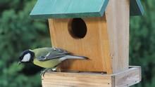 Birds Titmouse Feeding