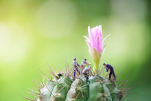 Miniature People With Cactus F...