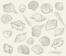 Sea Shellfish And Seashells. V...