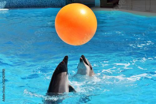два дельфина весело играют с большим оранжевым мячом