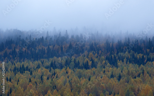 Foto op Canvas Nachtblauw Autumn landscape, misty forest