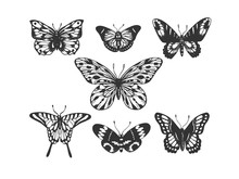Butterfly Insect Animal Engrav...
