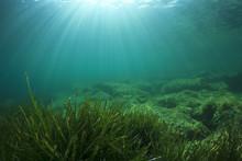 Green Grass Blue Ocean Underwater
