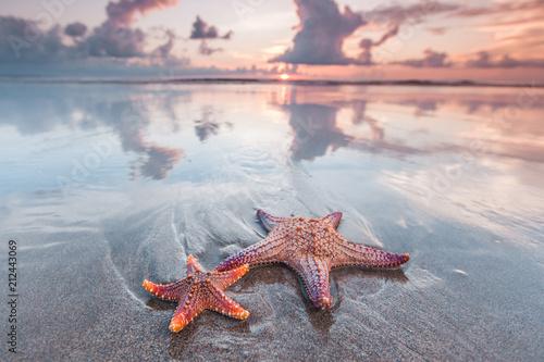Photo Starfish on beach
