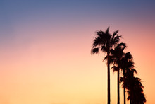 Row Of Palm Trees At Sunset On Mallorca, Balearic Islands, Spain