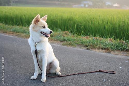 Fotografía 可愛い子犬