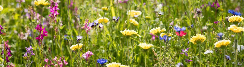 Fototapety, obrazy: Blumenwiese