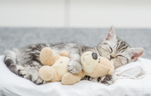 Cute Baby Kitten Sleeping With...