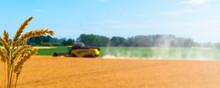 Weizenernte Getreideernte Hint...