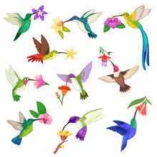Hummingbird Vector Tropical Humming Bird Character With Beautiful Birdie Wings On Exotic Flowers In Nature Wildlife Illustration Set Of Flying Humming-bird In Tropic Isolated On White Background