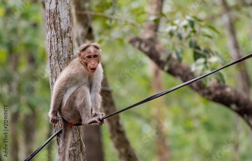monkeys hanging around Poster
