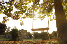 An Empty Wooden Swing Is Hung On A Rope On A Large Live Oak Branch . Calm Relaxing Beautiful View .