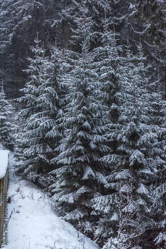 Aluminium Prints Dark grey Winter snow inside of the forest