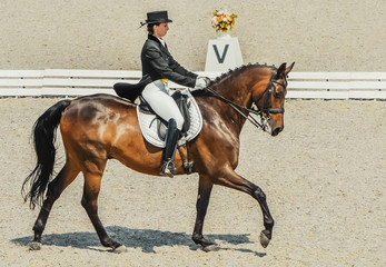 Dressage horse and rider. Brown chestnut horse portrait during dressage competition. Advanced dressage test.
