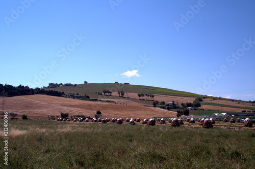 landscape,countryside,hilly landscape,crops,agriculture,panorama,view,sky,blue,field