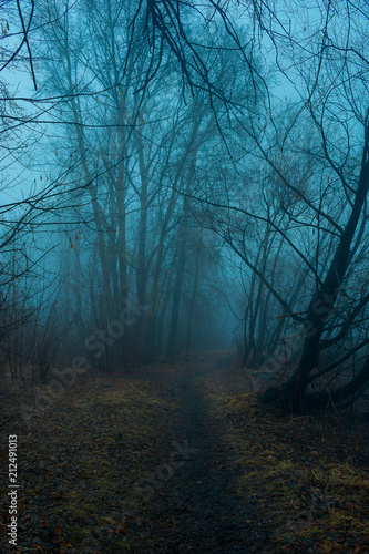 Fototapeten Wald Mystical forest in fog