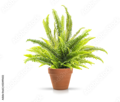 Fern in a clay pot on white background, including clipping path Fotobehang