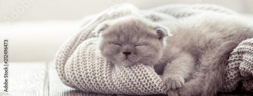 La pose en embrasure Chat kitten sleeps on a sweater