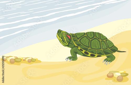 Naklejka premium Żółw na piaszczystym brzegu