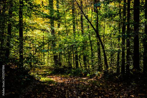 Fall foliage on an autumn hike