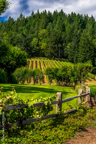 Tuinposter Wijngaard Green Plants in Orderly Rows in a Field with a Rustic Wood Fence and Forest Background