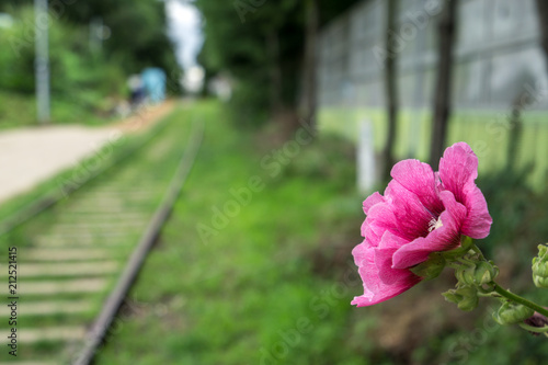 hibiscus syriacus in abandoned railroad Poster