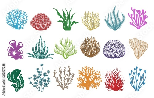 Fotografia, Obraz Seaweeds and corals on white