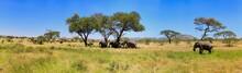 Lions Elephants Cheetah Elepha...