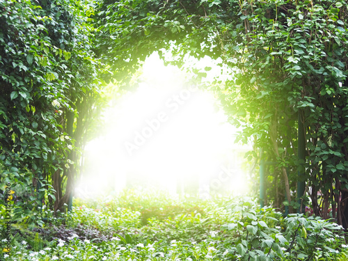Poster de jardin Arbre Arch creeper plant with sunlight