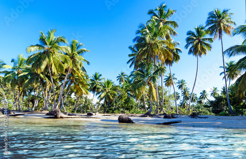 Poster Ezel Ferien, Tourismus, Sommer, Sonne, Strand, Auszeit, Meer, Glück, Entspannung, Meditation, Palmen, Mangroven: Traumurlaub an einem einsamen, karibischen Strand :)