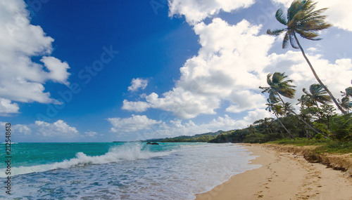 Foto op Plexiglas Caraïben Welcome to the Caribbean paradise: rest, relaxation, dreaming and enjoying a lonely beautiful beach :)