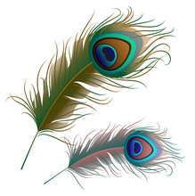 Two Peacock Feathers Isolated On White Background