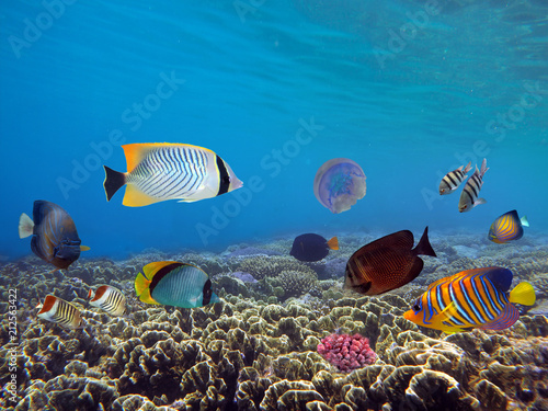 Poster Coral reefs Underwater scene. Coral reef.