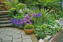 Colourful Tropical Patio Garden With Flowers And Planted Containers