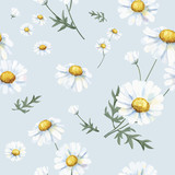 Hand drawn white common daisy pattern