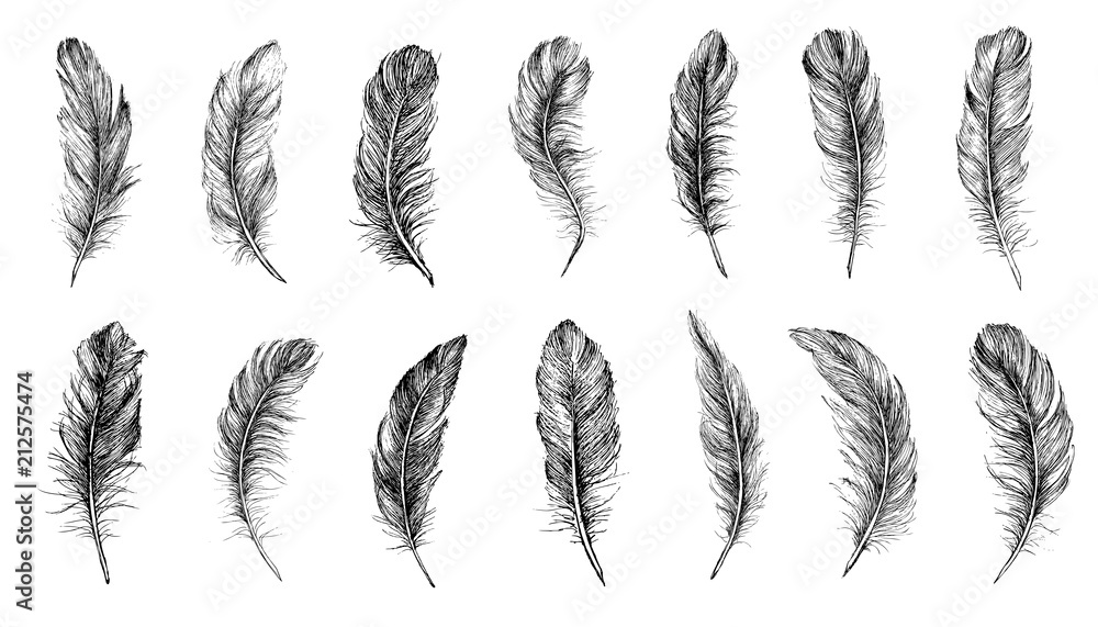 Fotografia Vector Black and White Feather Pattern