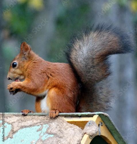 Keuken foto achterwand Eekhoorn The Funny squirrel